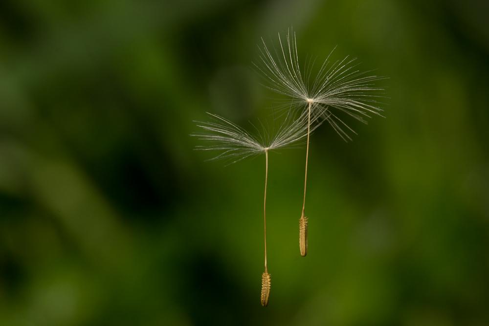 Magic or spider silk?